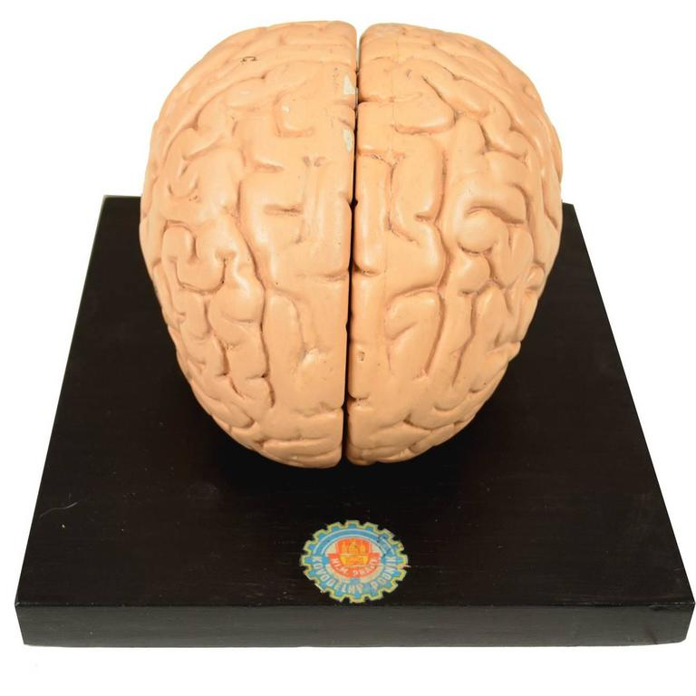 Didactic Model of Human Brain of the Early 1930s