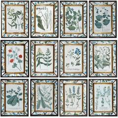 Johann Weinmann Set of Twelve Botanical Engravings