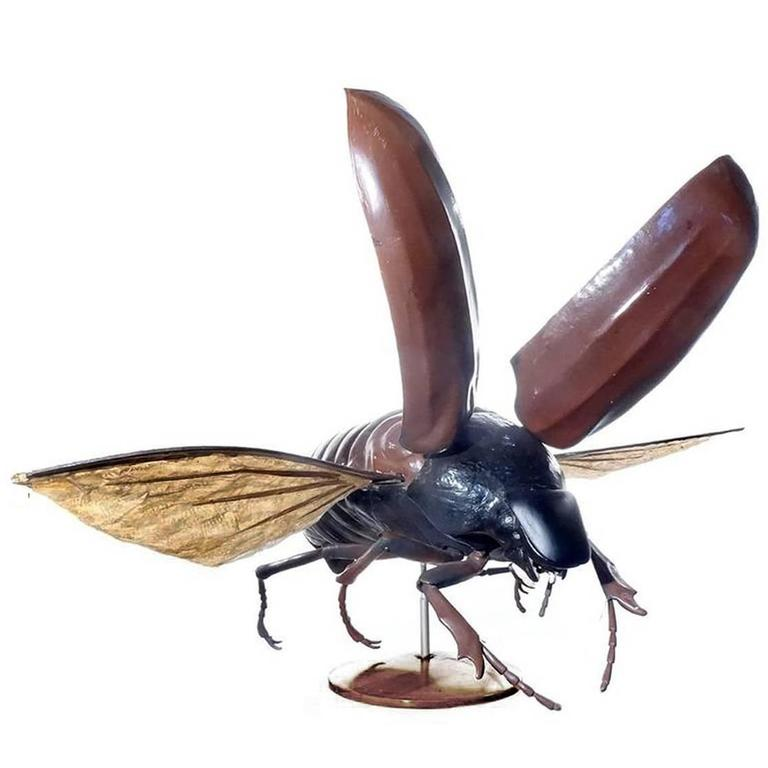 Large Early Anatomical Model of a Flying Beetle 1