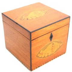 Regency Satinwood Tea Caddy with Conch Shell Inlay