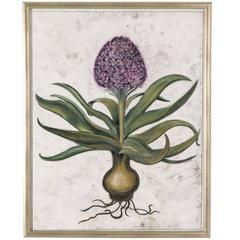 Framed Pastel Pf a Hyacinth