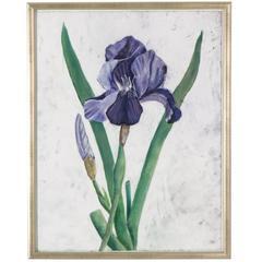 Framed Pastel of an Iris