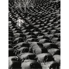 Fulvio Roiter, Silver print photography, Etna's Landscape
