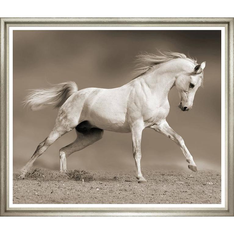 Large Sepia Horse Photo