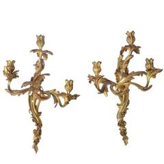 Pair of French Mid 19th Century Louis XV Style Gilt Bronze Sconces