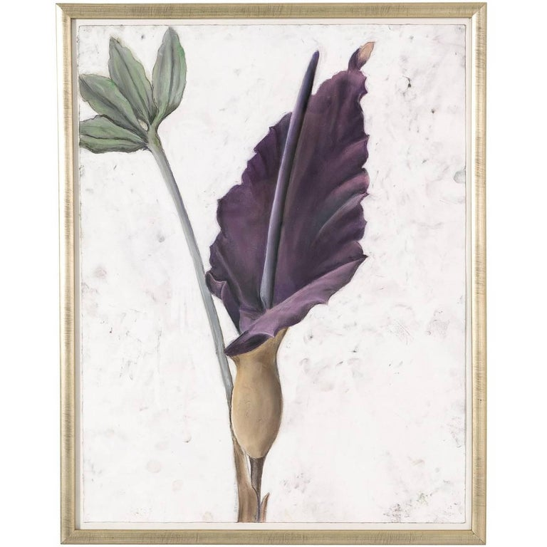 Contemporary Jack-in-the-Pulpit Flower Drawing
