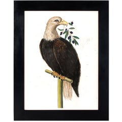 Eagle with an Olive Branch Pastel on Paper