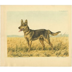 Set of Three Antique Etchings of Dogs by P. Wood, circa 1935