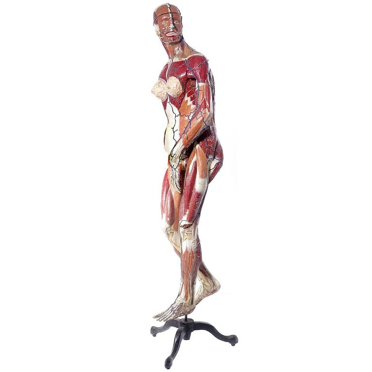 Full Size Dr. Auzoux Female Anatomical Model For Sale at 1stdibs