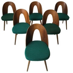 Set of Six Most Green Dining Room Chairs by Antonin Suman for Zilina. SALE!