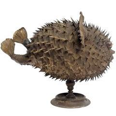 Rare Marine Natural Wunderkammer Specimen, the Porcupinefish Tetradon Cutcutia