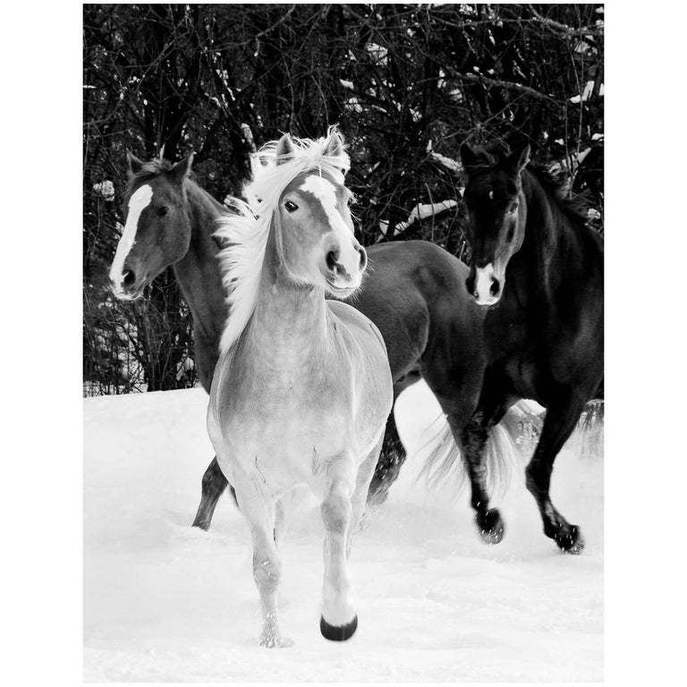 "21st Century Giclee Print Photograph ""Three Horses in Snow"", Janet Mesic Mackie"
