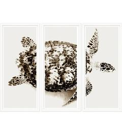 Sepia Sea Turtle Triptych