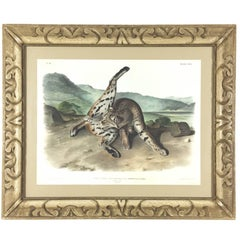 "Framed 1st Ed. ""Texan Lynx,"" Hand-Colored Lithograph by John James Audubon, 1846"