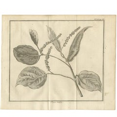 Antique Print of a Pepper Branch by I. Tirion, 1739