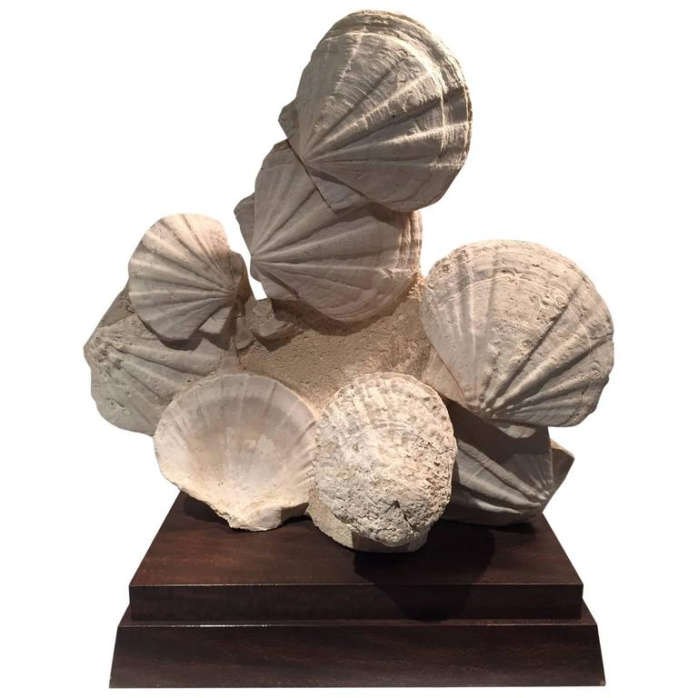 Large Mounted Pre-Historic Pecten Fossil Specimen from the Carboniferous Period
