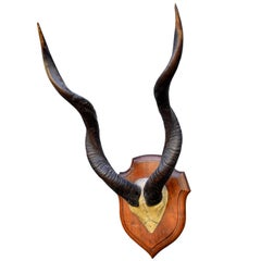 Large Set of Mounted African Antlers
