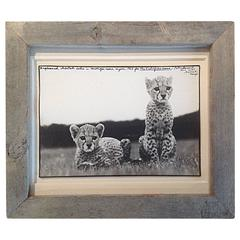 """Orphaned Cheetah Cubs"" Peter Beard Gelatin Silver Print"