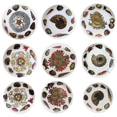 Piero Fornasetti Set of nine Plates in Early Conchiglie seashell pattern.