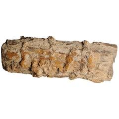 """""""Tree Jade"""" Petrified Wood Specimen"""