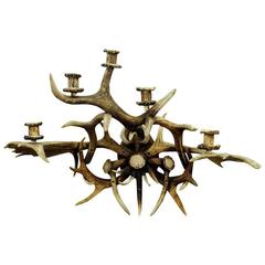 Large Black Forest Antler Sconce for Five Candles