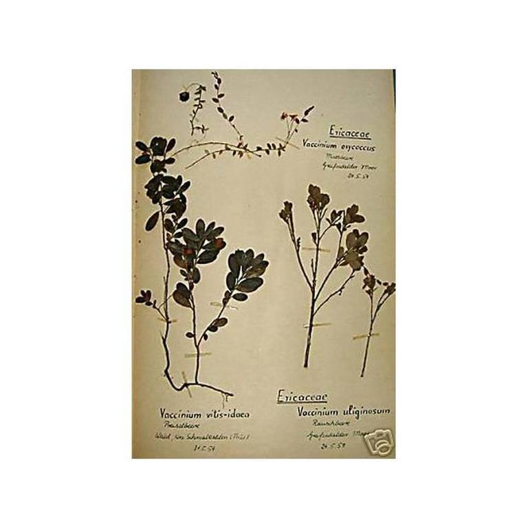 120 French Early 20th Century Pressed Botanical Specimens