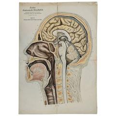 Anatomical Chart Median Incision of Head and Neck by Franz Frohse, circa 1900