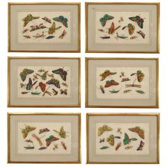 Six Gilt Framed Watercolors on Silk Depicting Butterflies and Other Insects