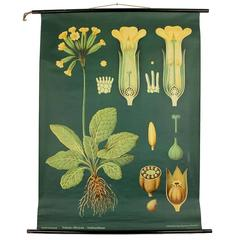 Midcentury Art Deco Chart Botanical Flower Folk Art