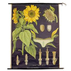 Midcentury Art Deco Chart, Botanical Flower Folk Art in the Style of O'Keefe