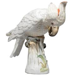 Large Meissen Porcelain Model of a Cockatoo