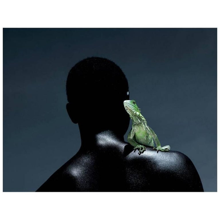 """Knight of the Iguana"" Photograph by Ezra Gozo Mansur"