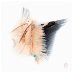 Art Print Titled 'Unknown Pose by Great White Pelican' by Sinke & van Tongeren