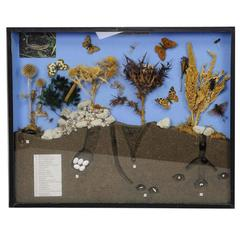 School Teaching Display of Biosphere of Poor Grassland