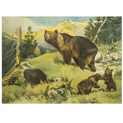 "Antique German School Wall Chart ""Bears"""