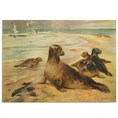 "Antique German School, Teaching Chart, Poster ""Harbor Seal"""