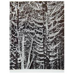 "Ansel Adams Original Signed Gelatin Silver Print ""Forest Detail, Winter"""