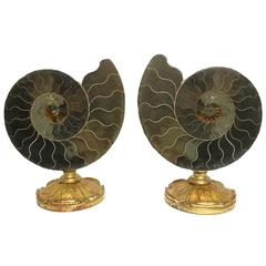 Couple of Wunderkammer Naturalia Ammonites Specimen