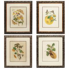 Collection of Four Maria Sydilla Merian