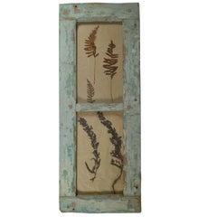 Herbiers Framed in Antique Window Frames