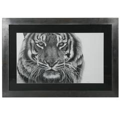 Tiger Dead Graphite Drawing by Francois Gruson, 2011