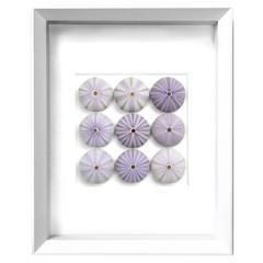 Lilac Urchins Mosaic