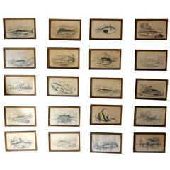 Lizars, 20 Hand-Colored Steel Engravings of Pre-Historic Fish