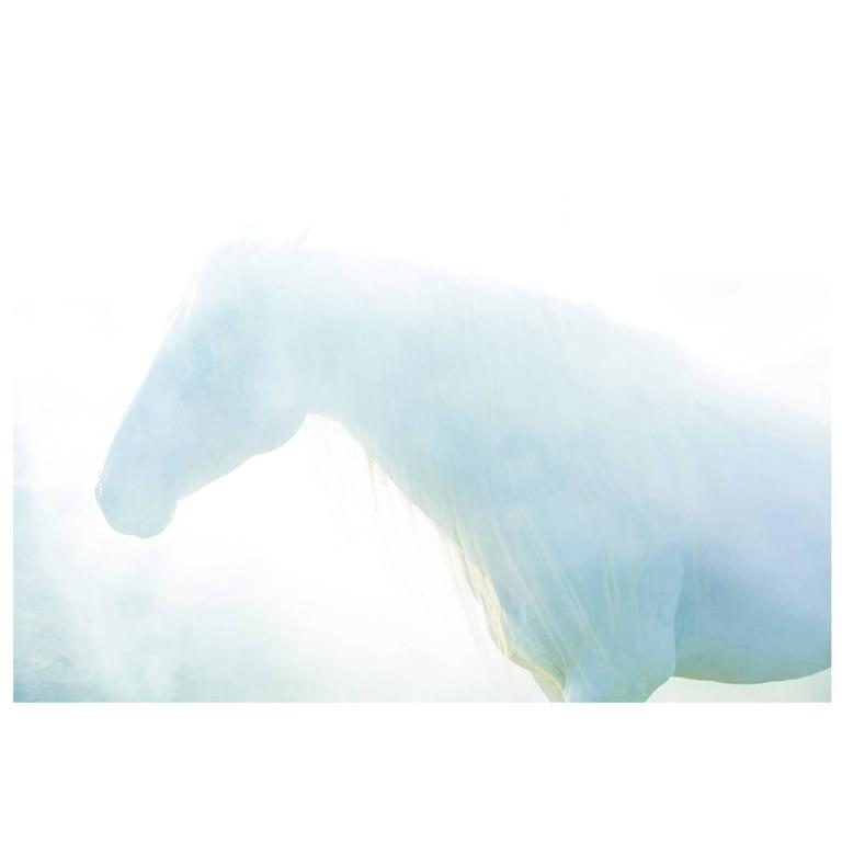 """Blue,"" Limited Edition Horse Color Photograph by Lisa Houlgrave"