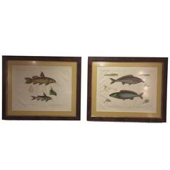 Pair of Framed Zoological Prints, Fish of the Nile
