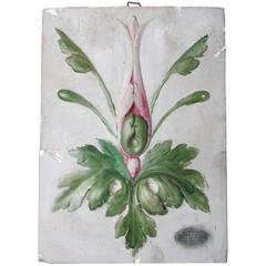 19th Century French Educational Plaster Botanical Plaque