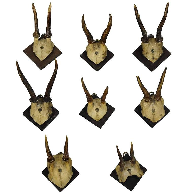 Eight Antique Black Forest Deer Trophies, circa 1900