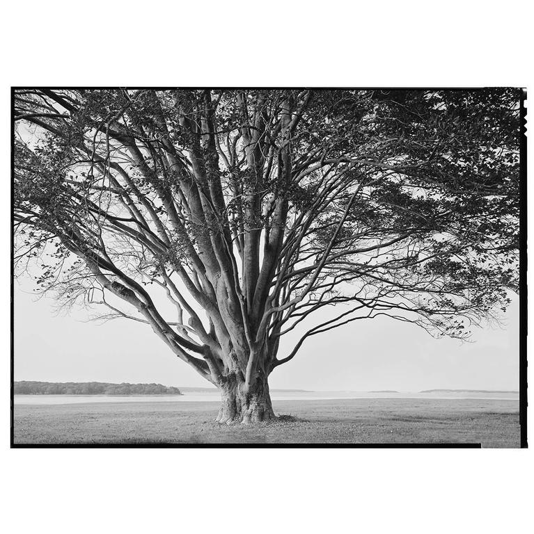 Beautiful Black and White Framed Photograph by Charles Baker