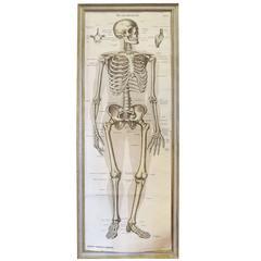 German Skeletal System Chart