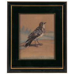 19th Century English Watercolor of a Bird